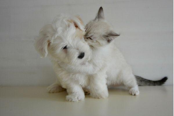 Blechy ze psa nebo kočky nejlíp vyčešete odsávaným nástavcem přímo do vysavače Hyla