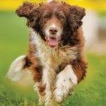 Chraňte psa před vedrem. Kožich mu nestříhejte – vyčesávejte !