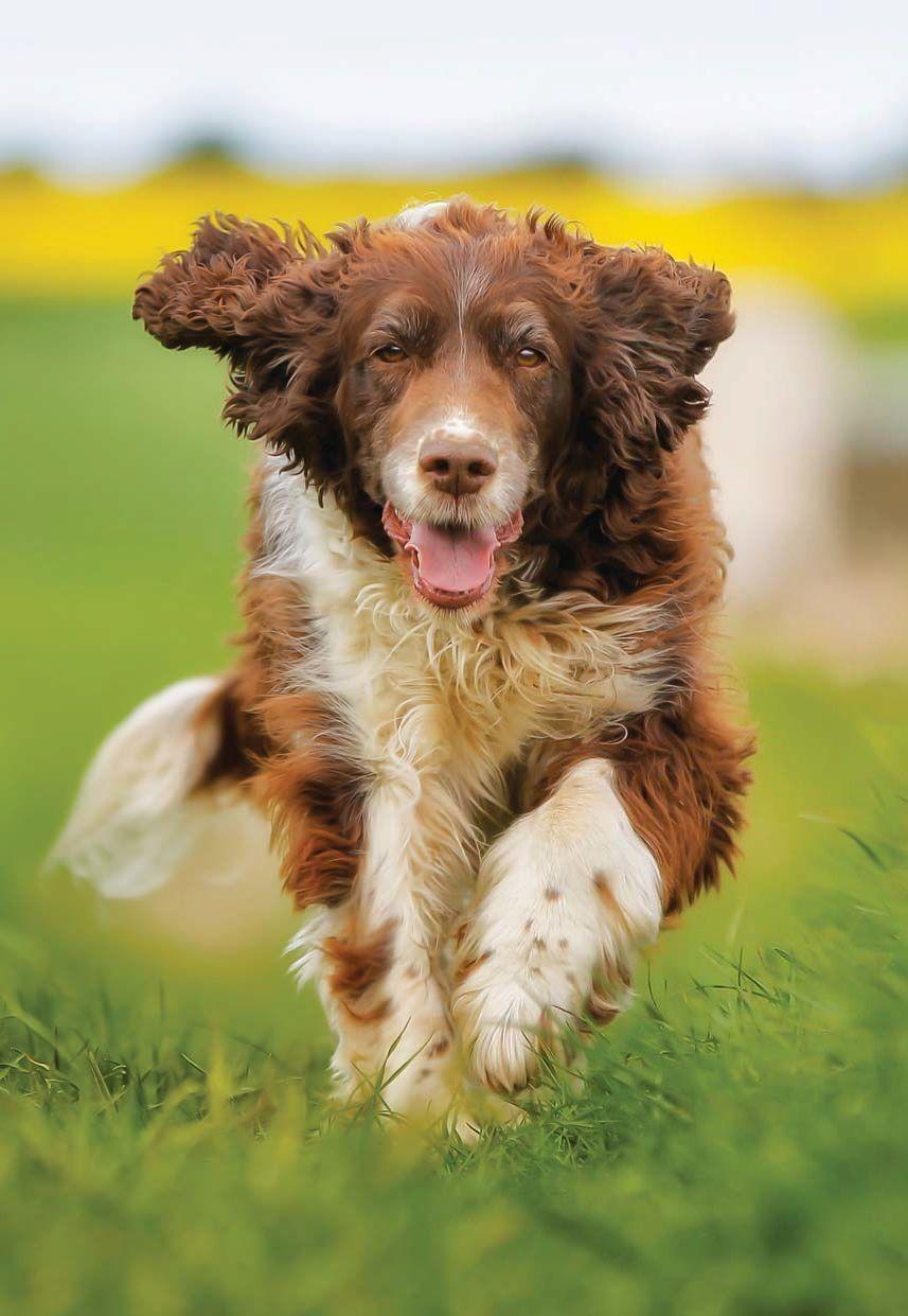 Šťastný středně velký pes vyčesávaný kartáčem FooLee Easee