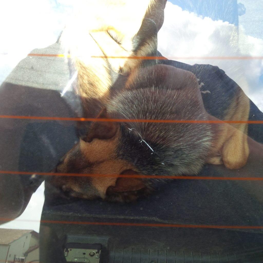 Vlčák zavřený vautě vlétě vhorku