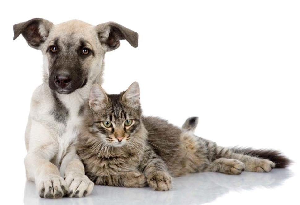 Pes a kočka vykartáčovaní precizními kartáči foolee