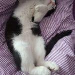 Každá kočka si užije přikrývku zovčí vlny