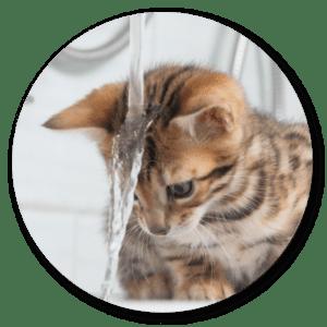 kočka se koupá se šamponem foolee beauty narychlé vyčesávání vobdobí línání