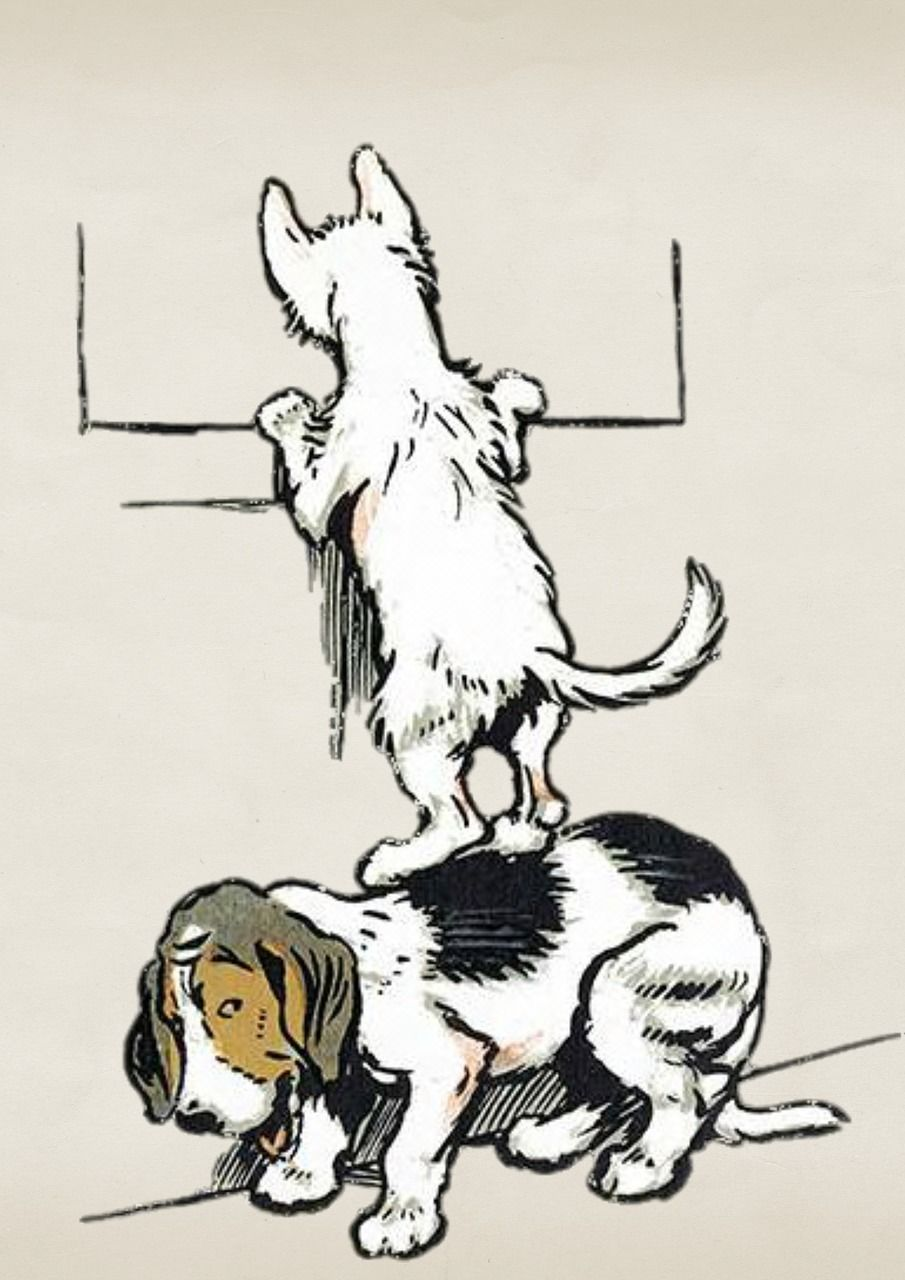 Pes pomáhá kočce koronavirus čistá pohoda