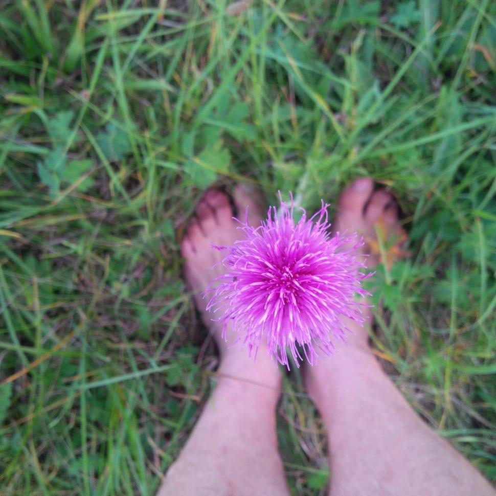 Bosé nohy a bodlák