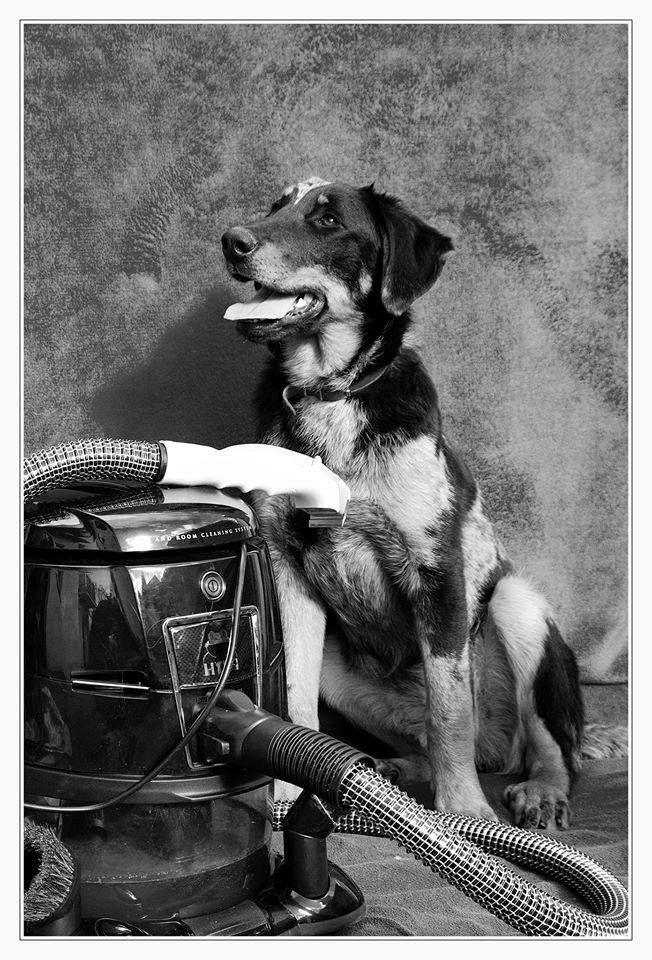 beaucerom shubicí navyčesávání psí srsti přímo dovodního vysavače Hyla