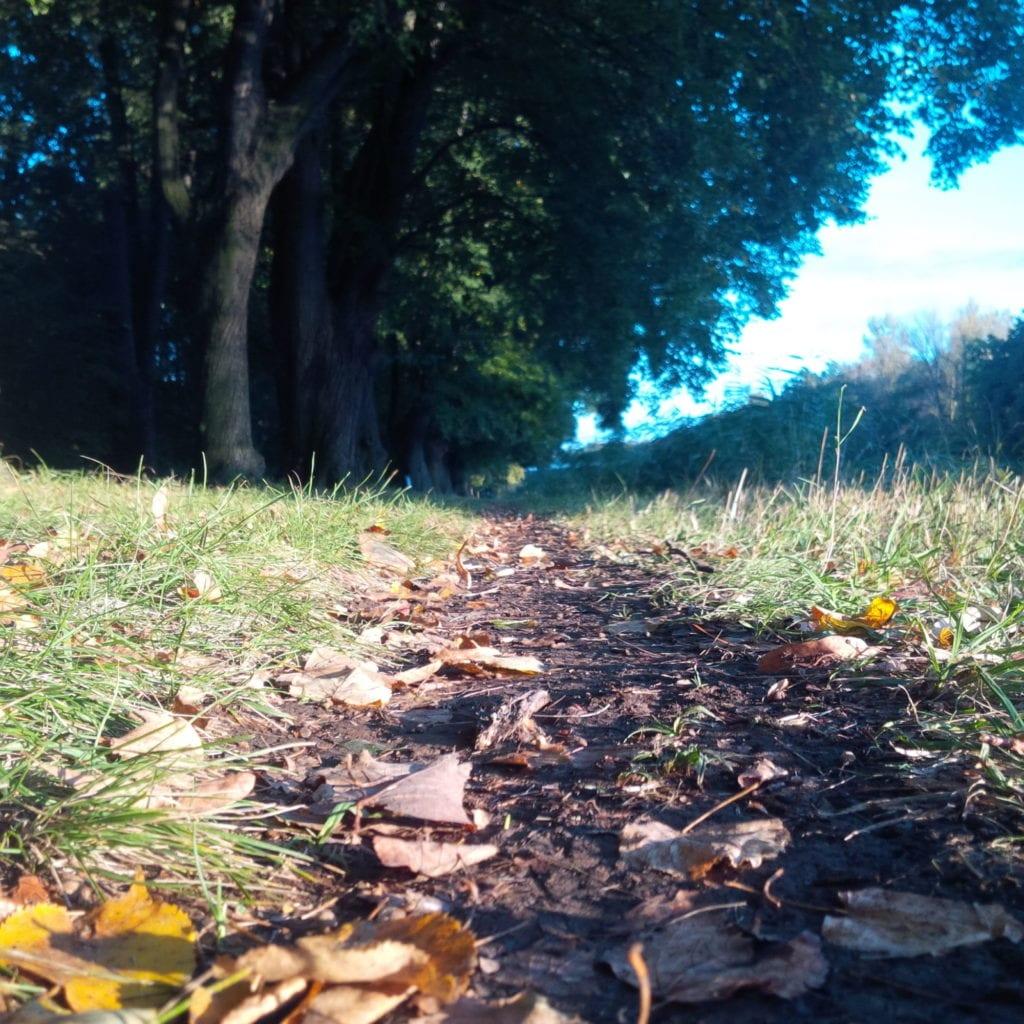 Měkká pěšinka vystlaná listím nabřehu Labe