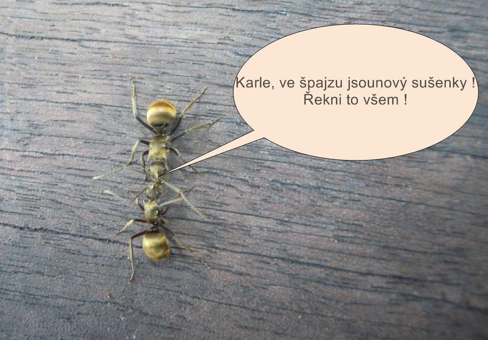 Mravenci debatují osušenkách ve spíži Čistá pohoda