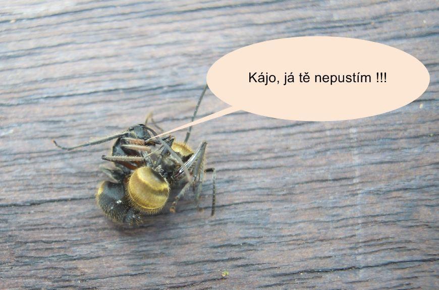 Mravenec přesvědčuje mravence karla, aby utekl před vysavačem Hyla Čistá pohoda