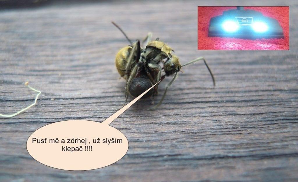 Poslední varování pro útěk mravenců před klepačem Čistá pohoda