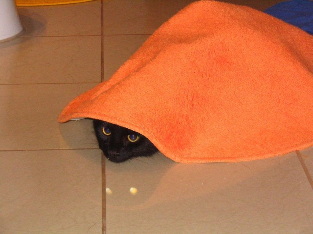 kontrola podkladu pod kobercem před praním koberce - kočka pod kobercem